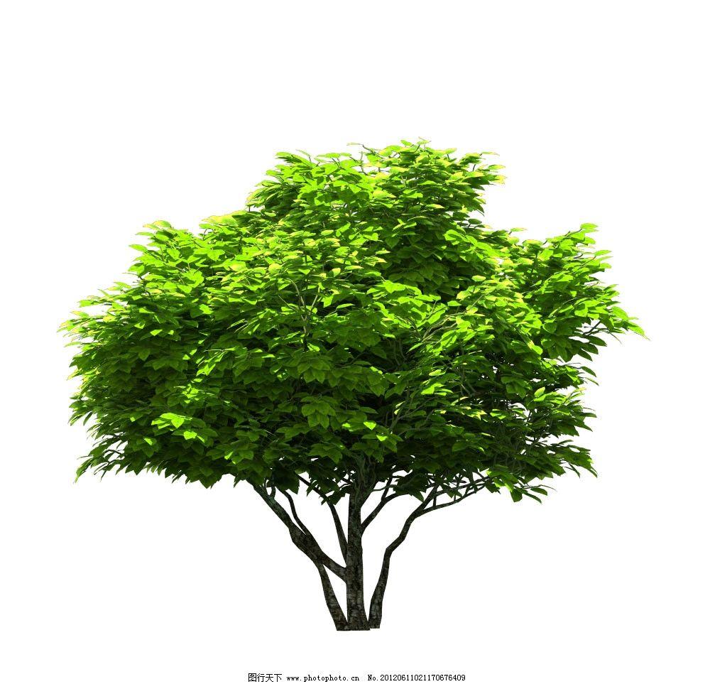 植物 植物素材 树 3d设计 设计 72dpi jpg