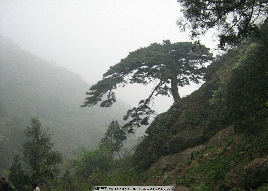 大山 大树 松树 石头 游玩 景点 旅游 大自然 摄影 自然风景 自然景观