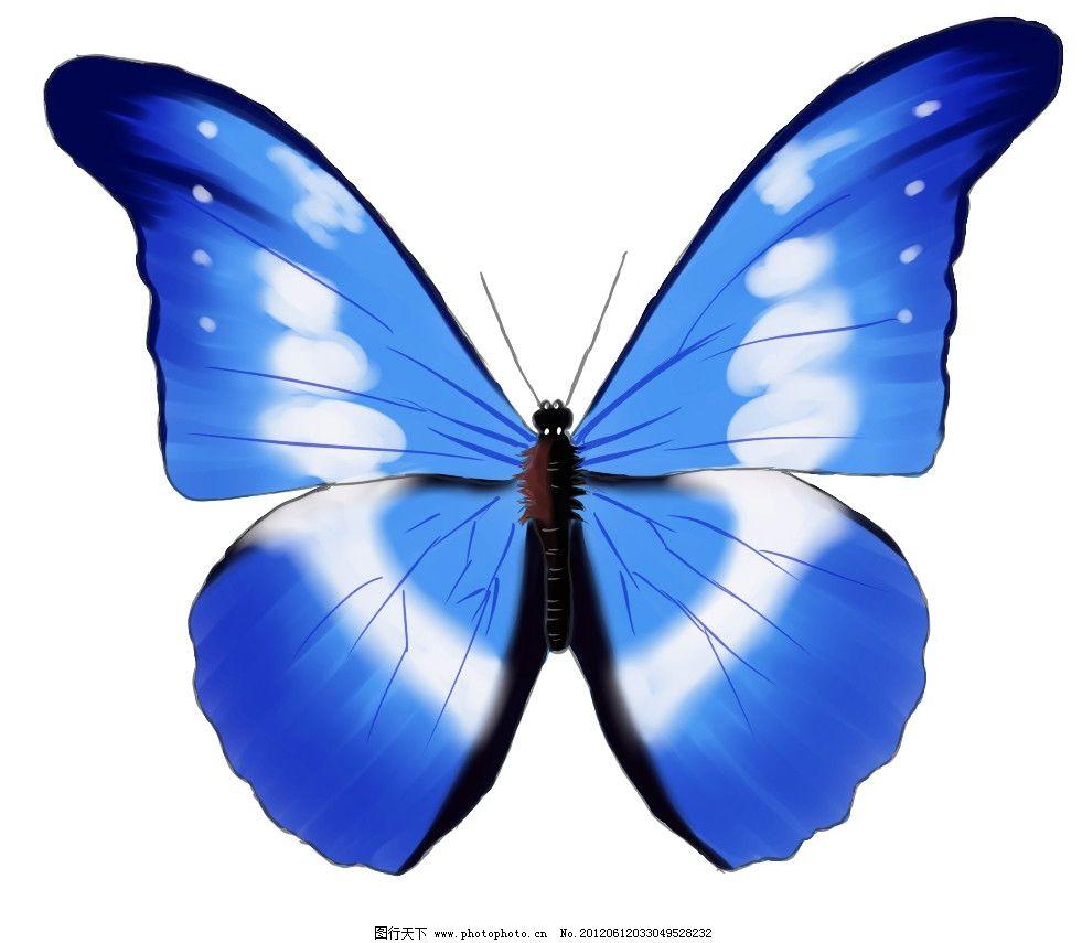 手绘蝴蝶 蓝色白花图片