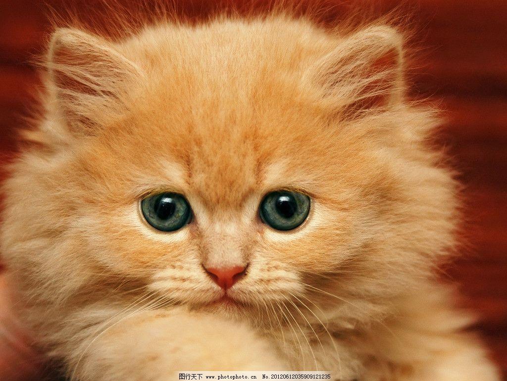 壁纸 动物 猫 猫咪 小猫 桌面 1024_770