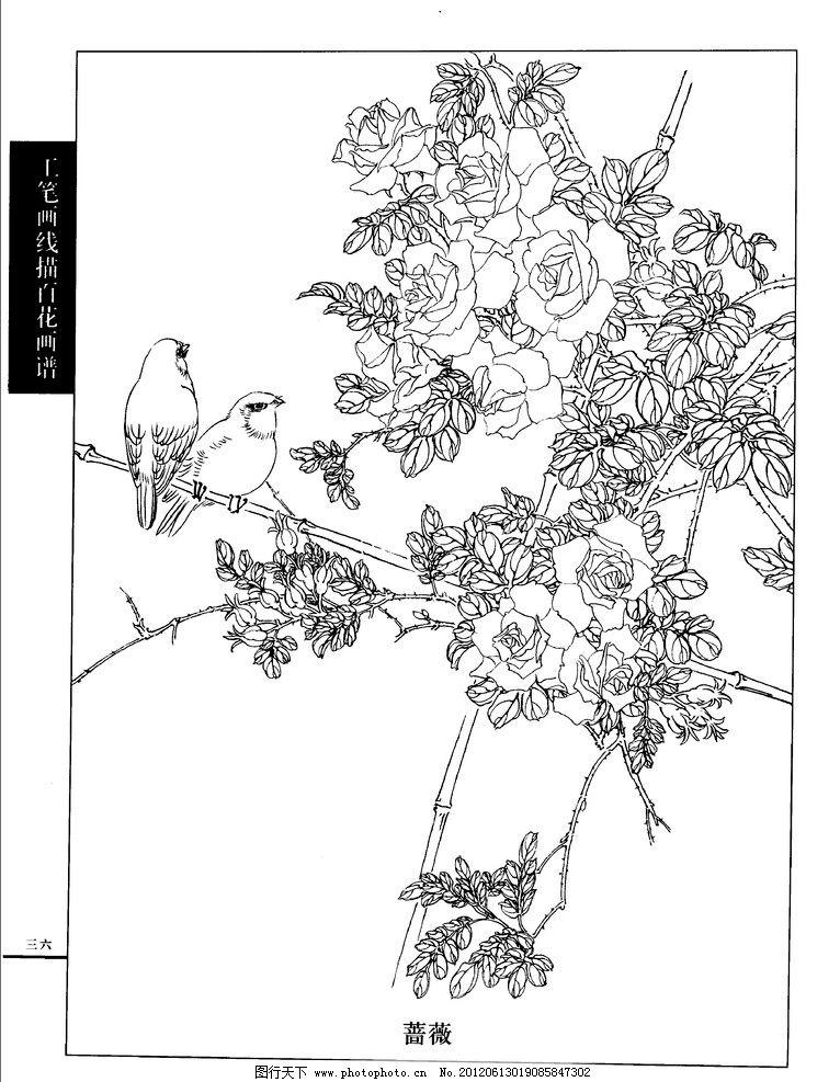 工笔画线描百花画谱 蔷薇图片
