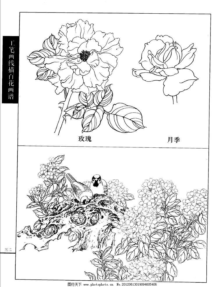 工笔画线描百花画谱 月季 玫瑰图片