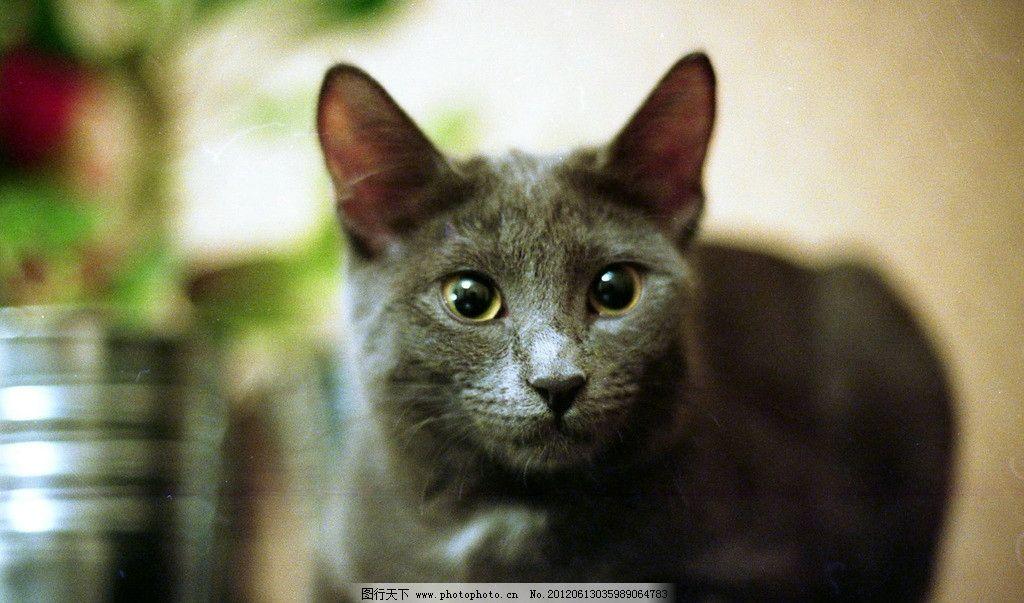 猫咪 宠物 壁纸 动物 可爱 毛皮 老鼠 摄影