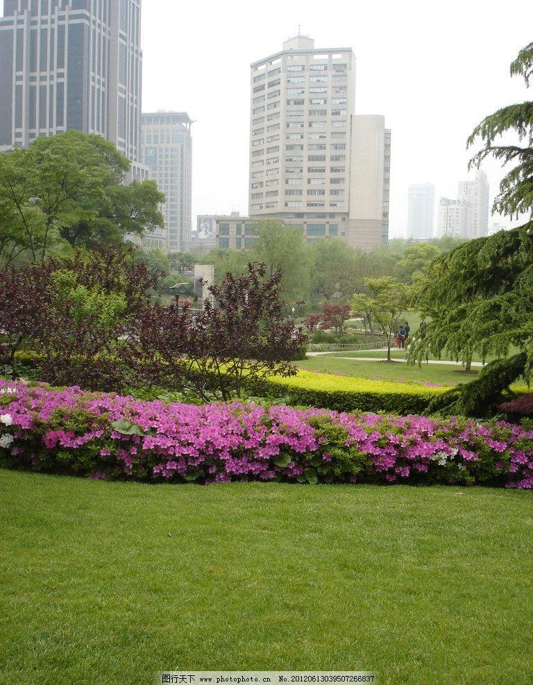 公园景观参考 上海 市中心 延中绿地 绿化 植物 摄影 种植 草坪