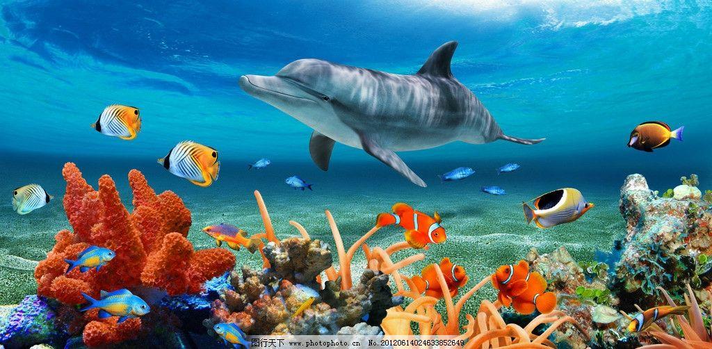 海底世界 海洋 海鱼 海豚 珊瑚 热带鱼 清晰 红色 黄色 蓝色 贝壳