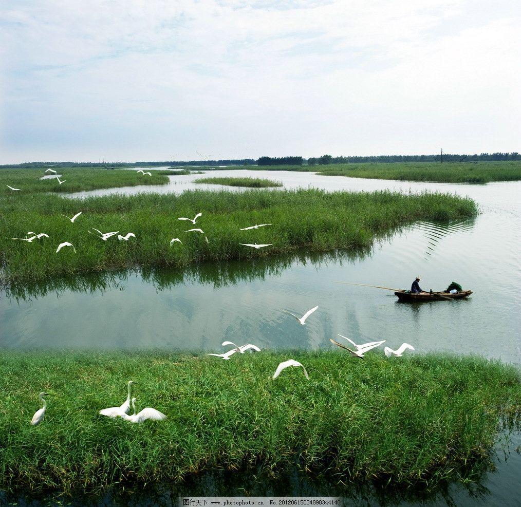 千岛湿地 沛县 碧水 海鸟 绿草 自然风景 自然景观 摄影 240dpi jpg