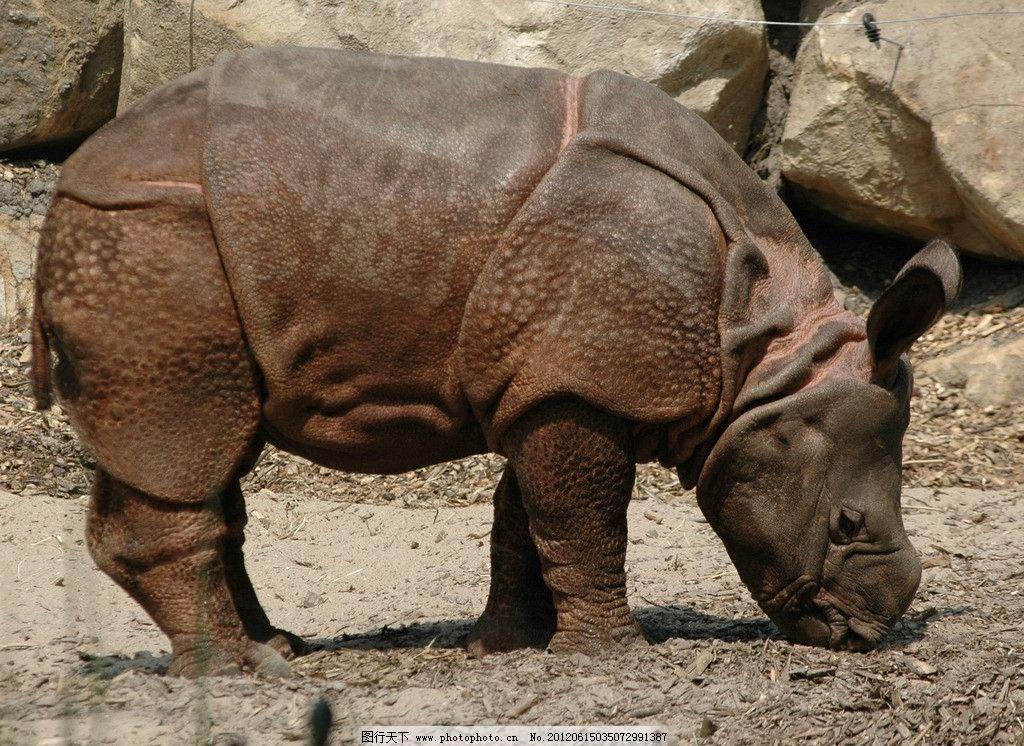 犀牛 野生动物园犀牛 生物世界 摄影