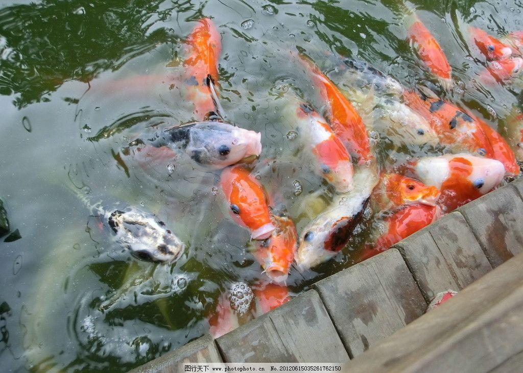 吃奶鱼 鱼儿 小鱼 鱼群 水果 生物世界 摄影 72dpi jpg