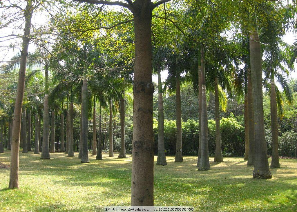 植物 绿植 风景 海南 树木 阳光 植被 椰子树 南方 绿色 环境 夕阳 休