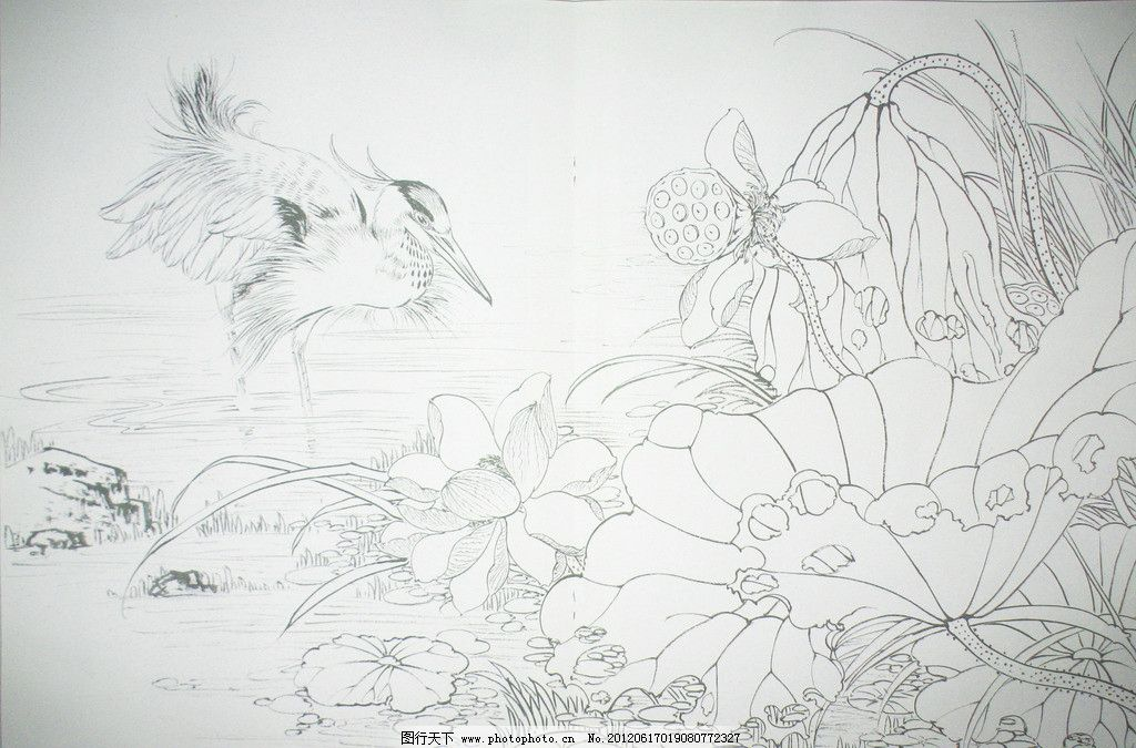 荷塘拾趣 白描 线描 荷花 白鹭 花 水 池塘 野外 野草 白描花鸟 绘画