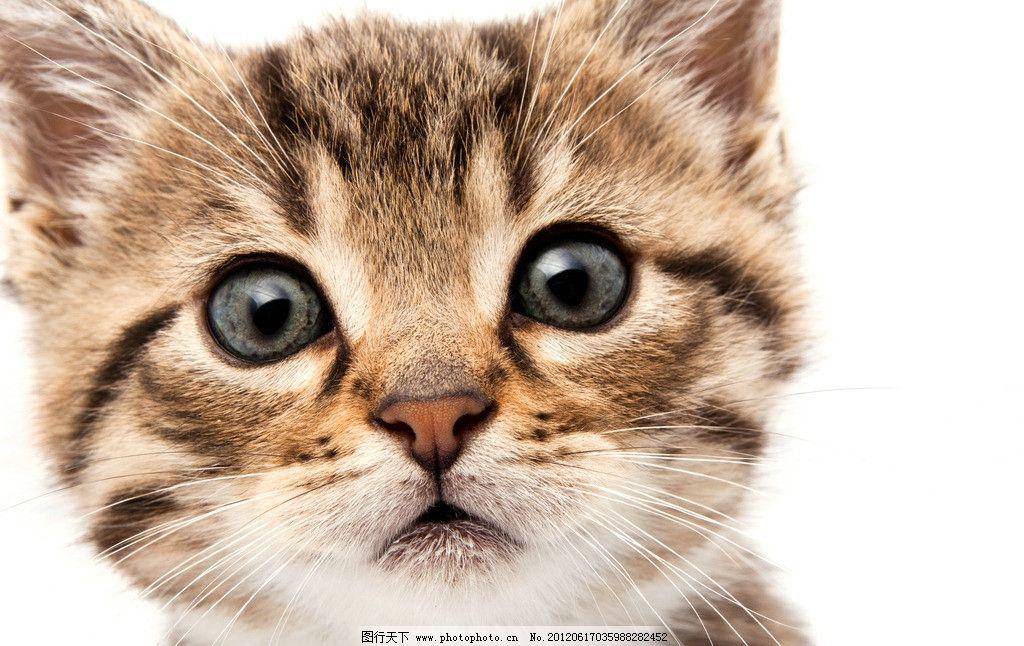 可爱小猫 可爱 小猫 宠物 家禽家畜 生物世界 摄影 300dpi jpg