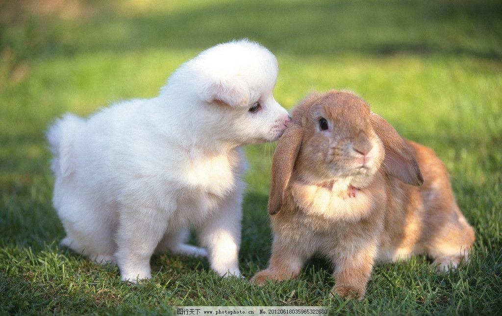 给可爱的小兔子和小狗狗起一个好听可爱的英文名字