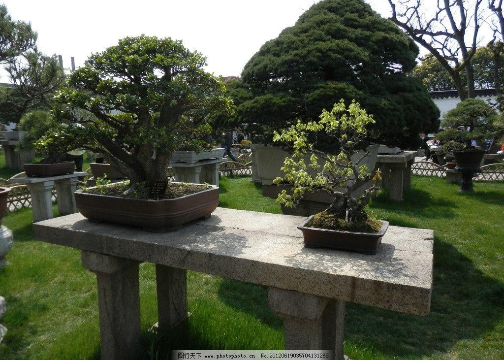 清新雅致盆栽景观 方石桌 整齐修剪的树木 松树 绿草地 竹篱笆 行人