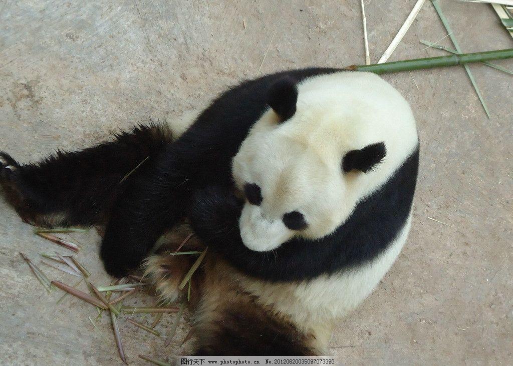 云南野生动物园图片