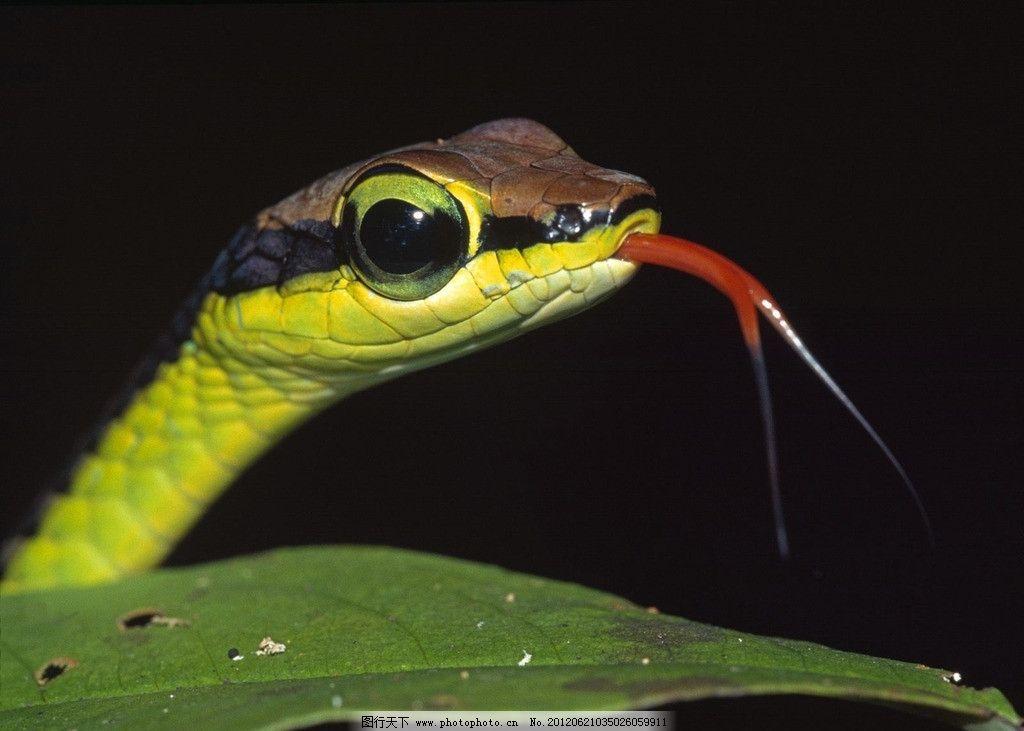 蜥蜴 彩色 冷血动物 爬虫类 野生动物 生物世界 摄影 72dpi jpg
