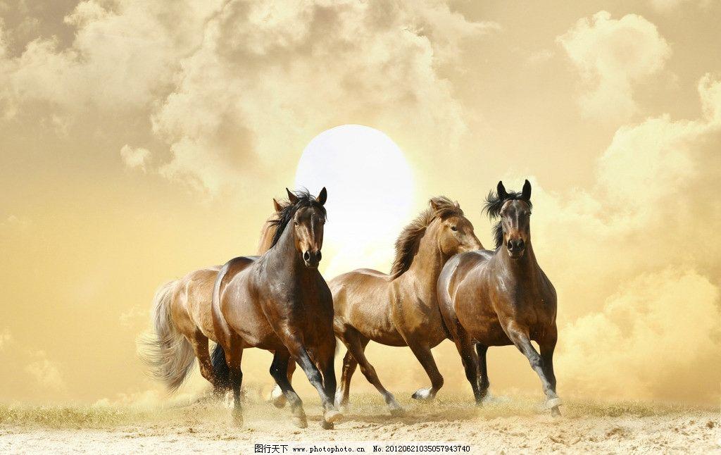 奔跑的骏马 骏马 奔腾 马儿 马匹 野生动物 生物世界 摄影 300dpi jpg