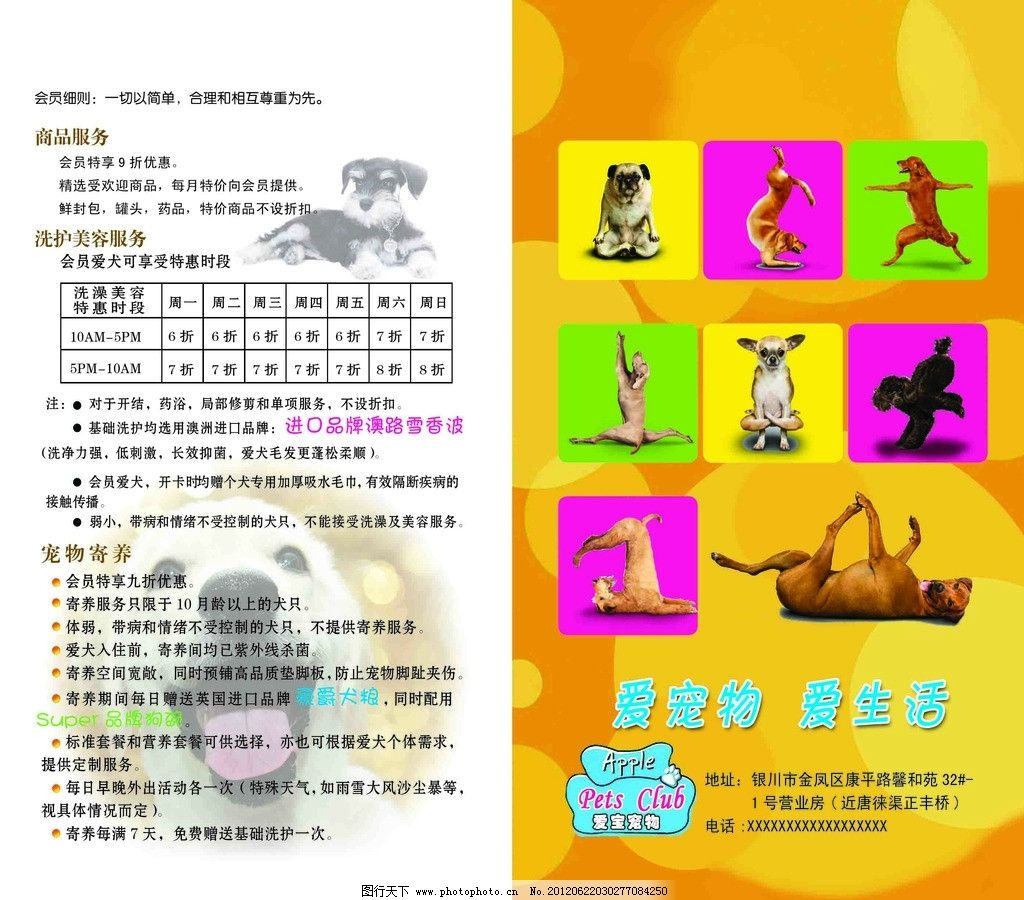 宠物彩页 爱宠物 可爱小狗 狗 动作 时尚背景 dm宣传单 广告设计模板