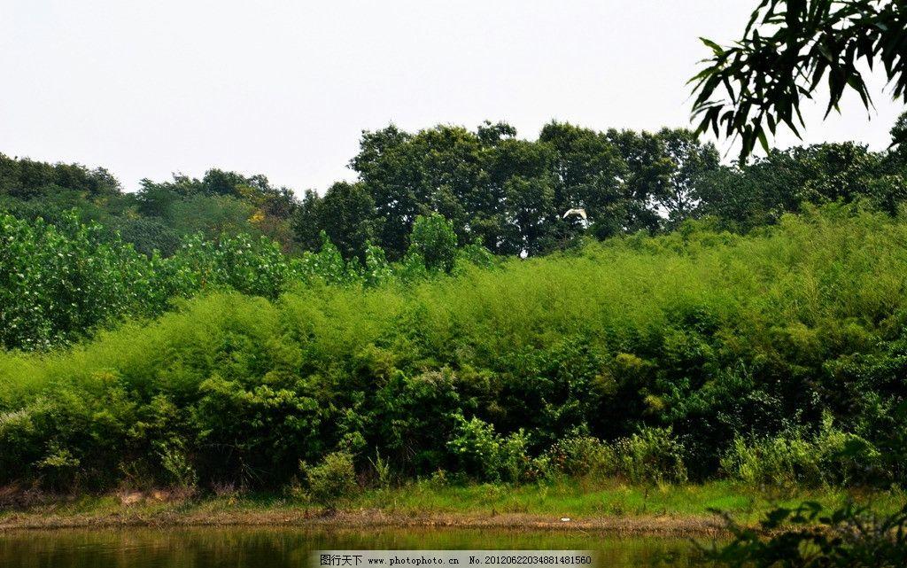 竹溪 毛竹 河流 自然风景 自然景观 摄影 300dpi jpg