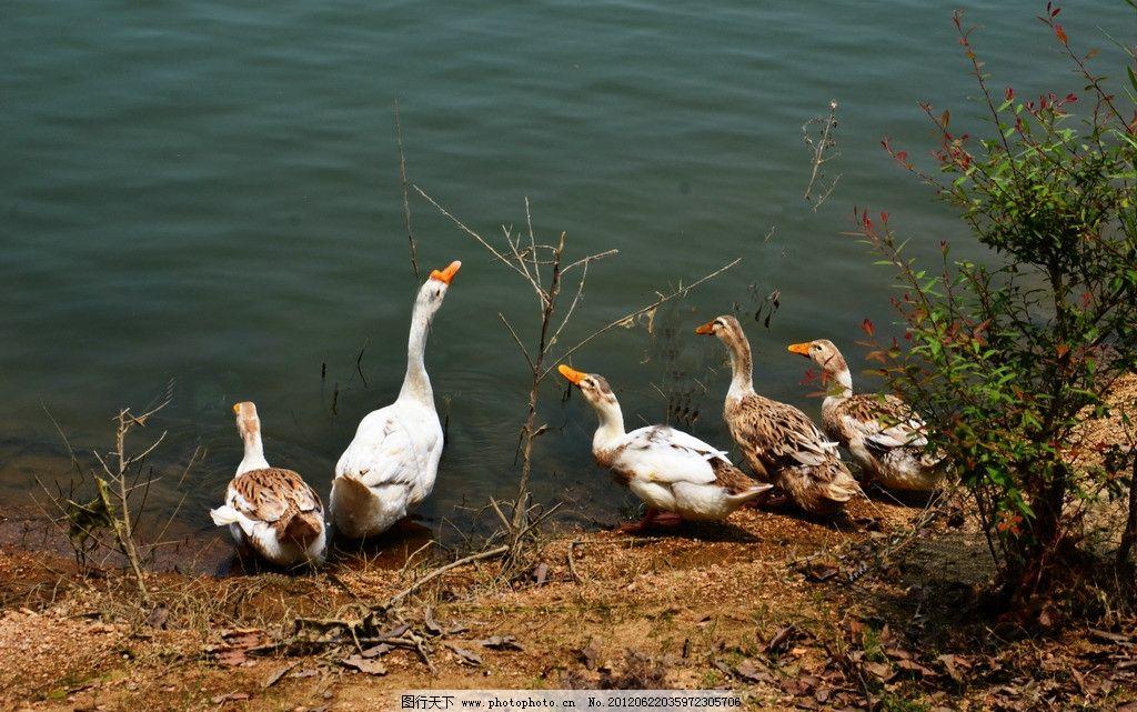壁纸 动物 鸟 鸟类 1024_641
