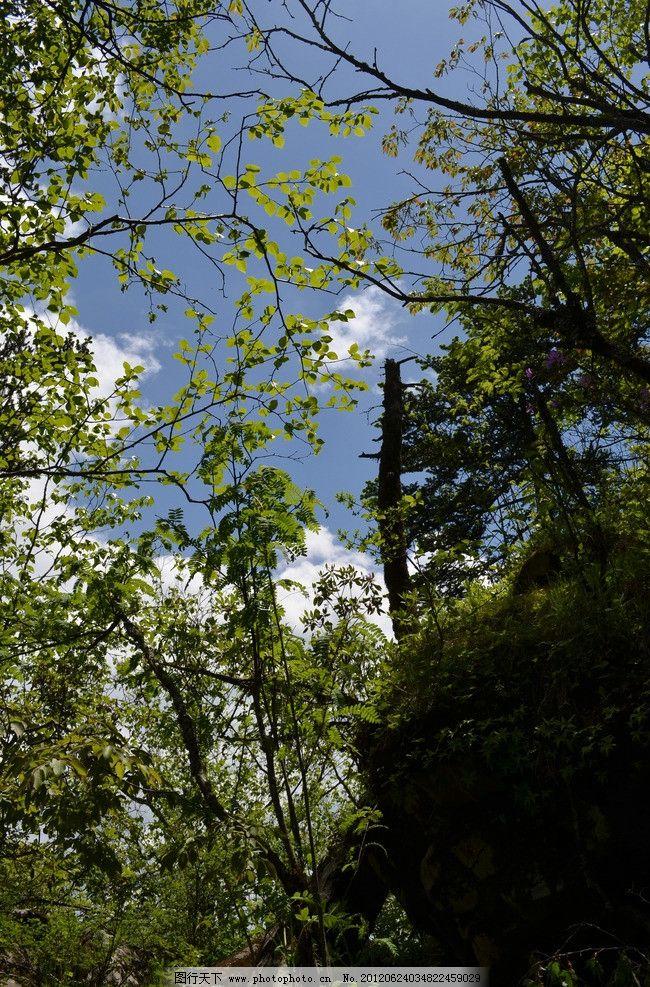野外风光 蓝天 白云 阳光 树林 树木 绿叶 植被 夏天 秦岭山水 自然
