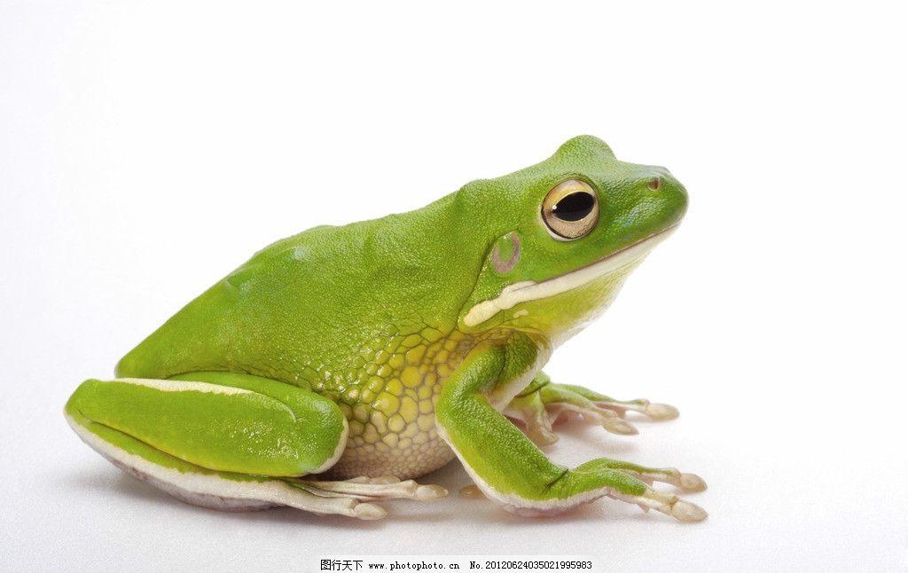 青蛙纹 大眼珠 斑纹 两栖动物 弹跳高手 捕蚊高手 动物世界 野生动物