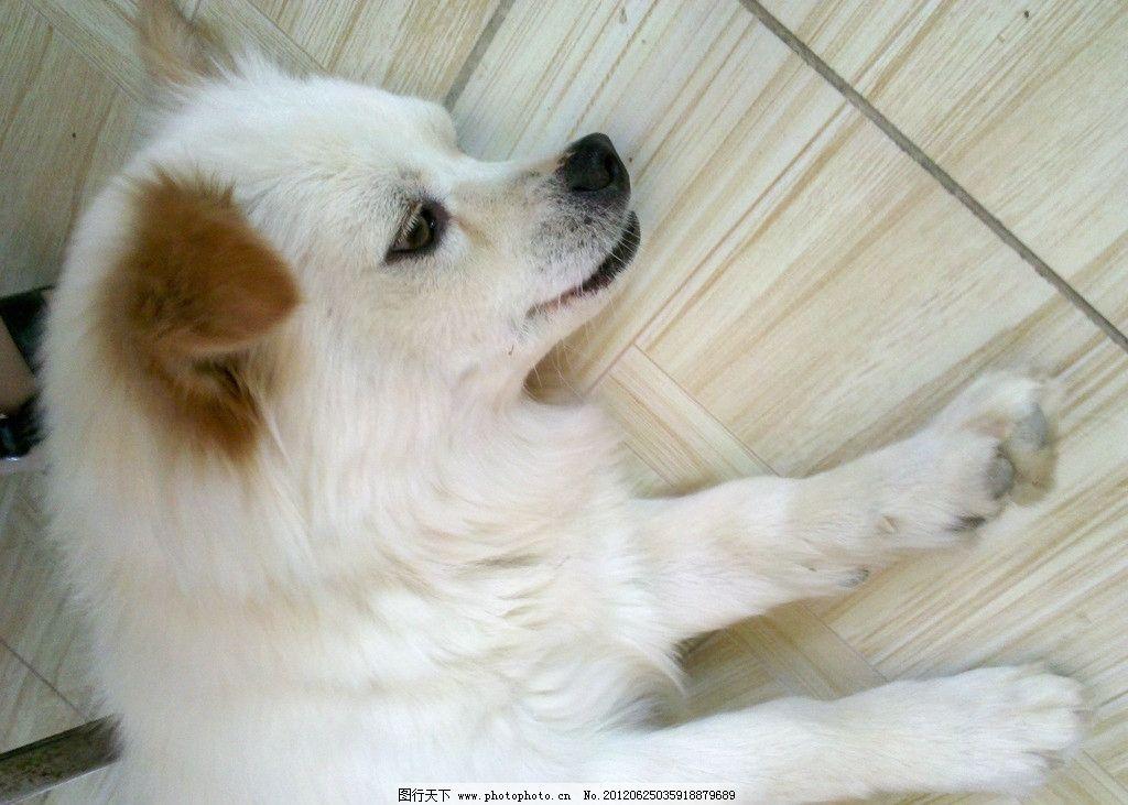 狗狗 睡了 可爱 白狗 小狗 家禽家畜 生物世界 摄影 96dpi jpg