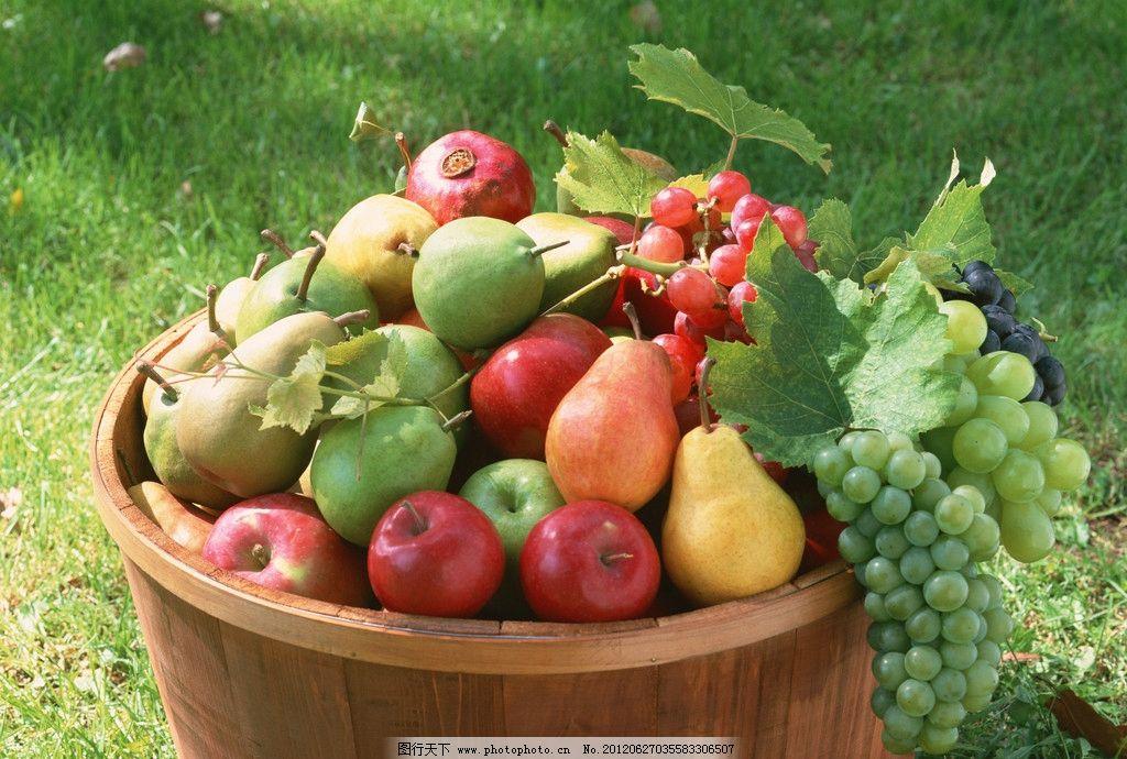 美味水果 雪梨 苹果 葡萄 樱桃 果实 绿色食品 水果摄影 生物世界