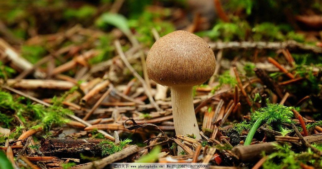 小蘑菇图片