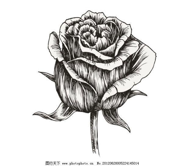 素描玫瑰花丛_钢笔手绘花朵素材_手绘