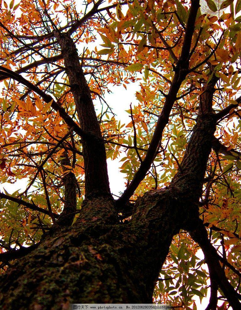 参天大树 树木摄影 大树 树木 树林 树 树干 参天树木 树木素材 树木