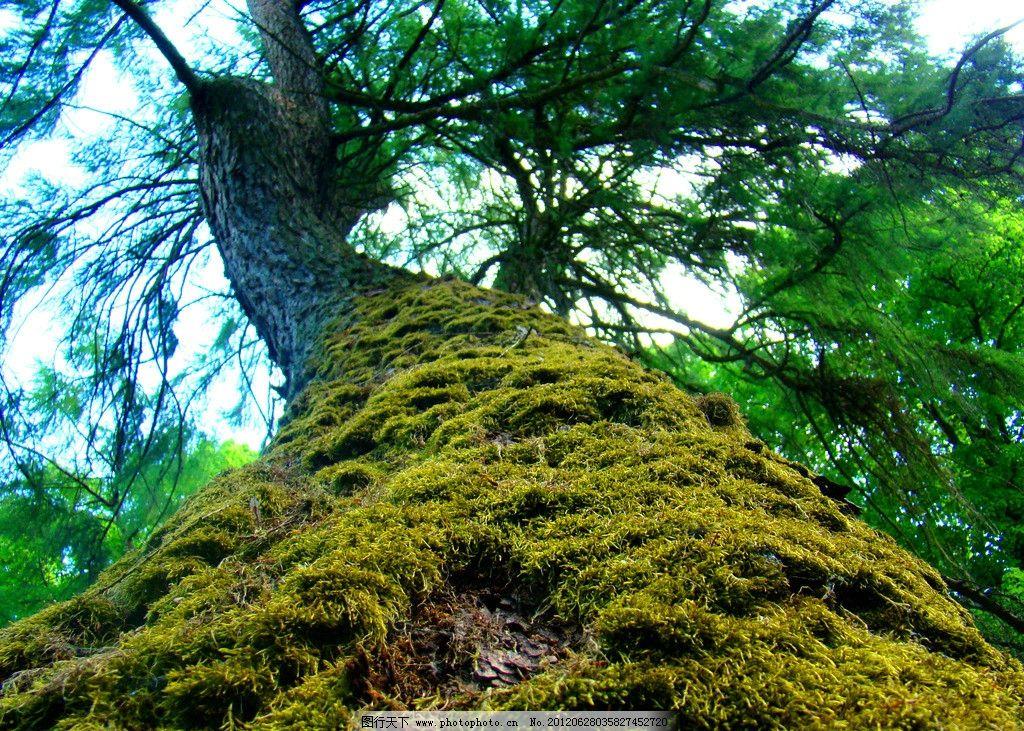 參天樹木 樹木攝影 大樹 樹木 樹林 樹 樹干 參天大樹 樹木素材 樹木