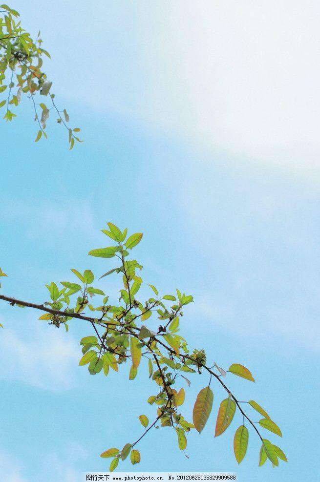 清新蓝天绿叶 清新 蓝天 绿叶 树木树叶 生物世界 摄影 350dpi jpg