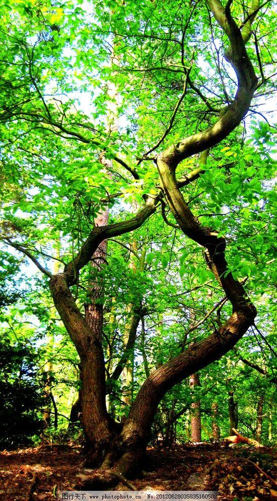 大樹 樹木攝影 樹木 樹林 樹 樹干 參天樹木 參天大樹 樹木素材 樹木