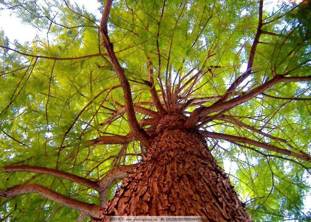 参天树木图片