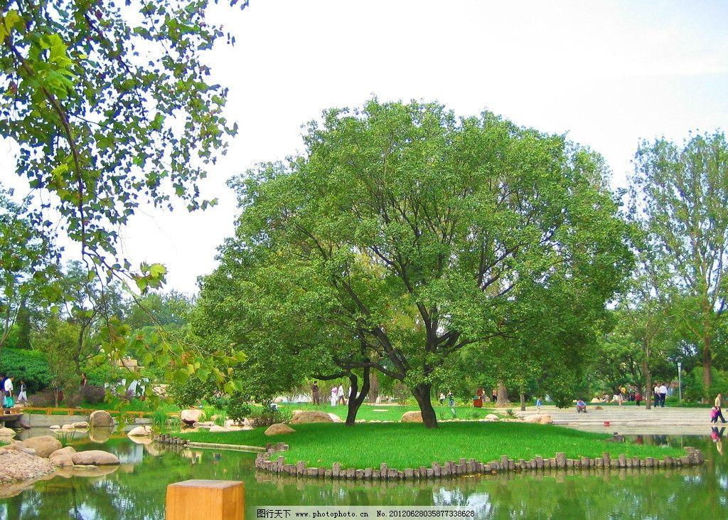 一棵树 公园 夏天 绿地 湖泊 休闲 树木树叶 生物世界 摄影 180dpi