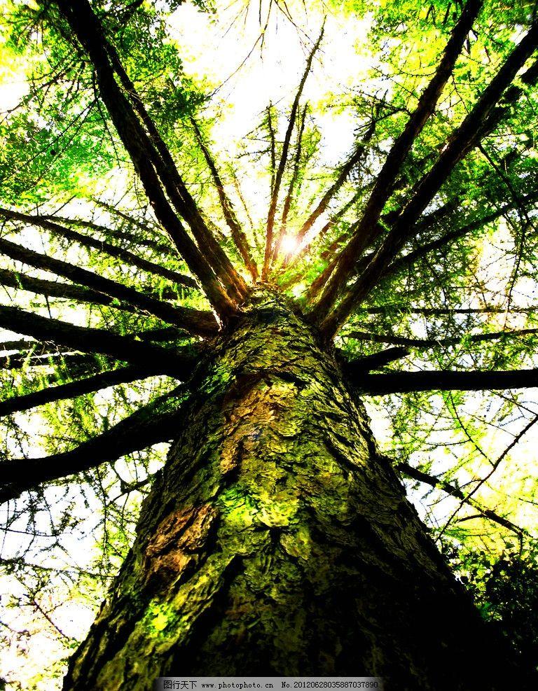 參天大樹 樹木攝影 大樹 樹木 樹林 樹 樹干 參天樹木 樹木素材 樹木
