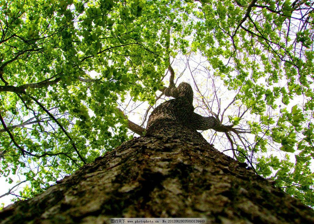参天树木 树木摄影 大树 树木 树林 树 树干 参天大树 树木素材 树木
