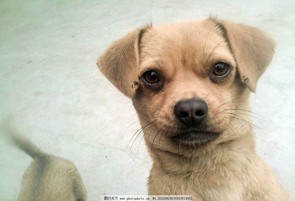 小狗 凝视 可爱 家禽家畜 生物世界 摄影 96dpi jpg