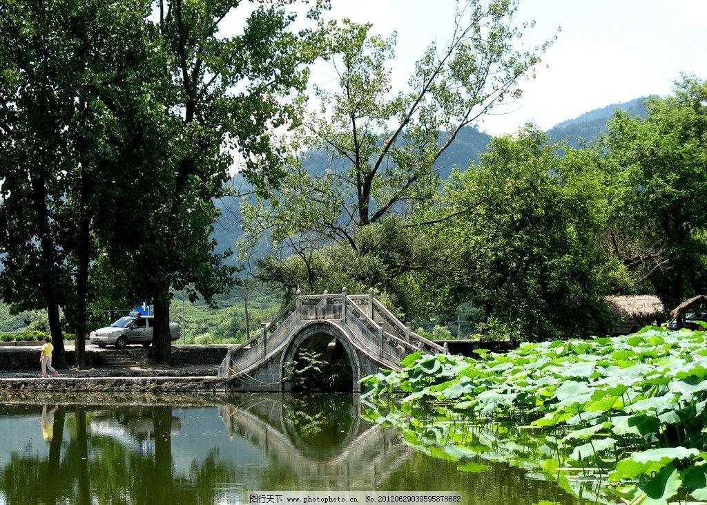 公园 园林 荷塘 荷花 湖水 石桥 拱桥 大树 森林公园 生态 自然 园林