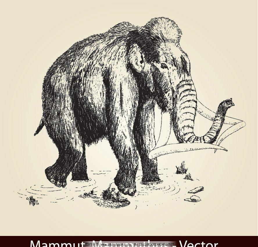 手绘大象图片
