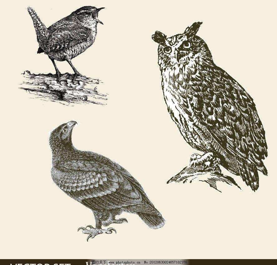 手绘小鸟猫头鹰 手绘 小鸟 猫头鹰 鹦鹉 鸟类 素描 矢量 鸟类主题
