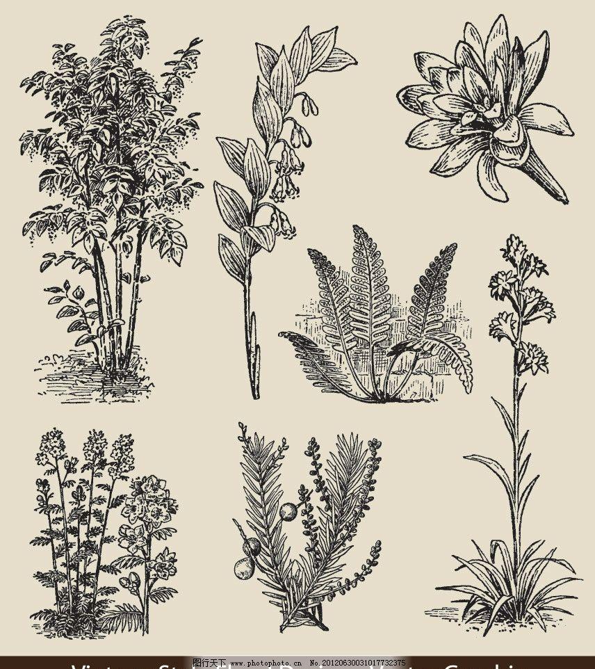 手绘 树木 鲜花 花纹 花朵 花卉 时尚 素描 矢量 素描画钢笔画矢量