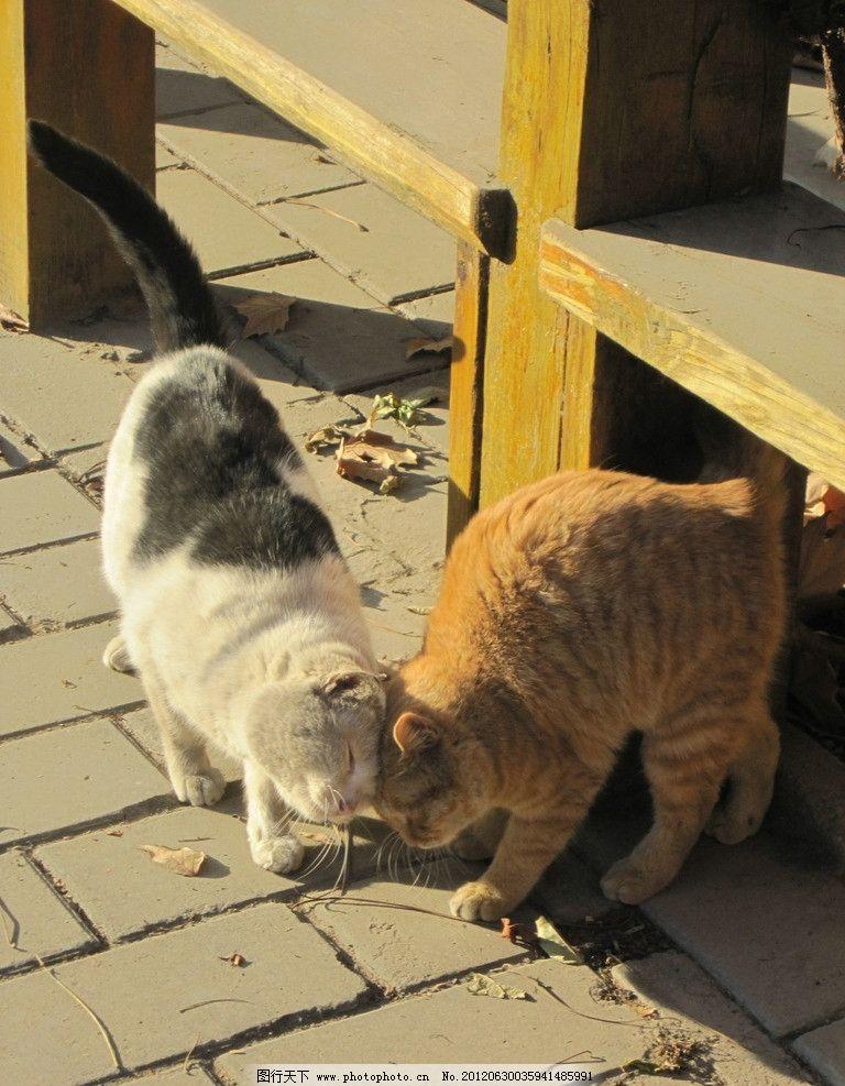 猫咪 小猫 动物 家禽家畜 生物世界 摄影 180dpi jpg